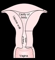 layla rose sex tubes